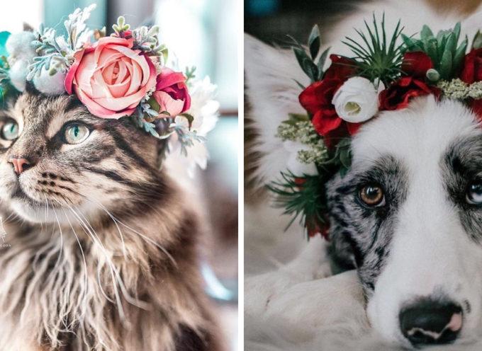 L'artista sta conquistando internet con queste maestose ghirlande per animali