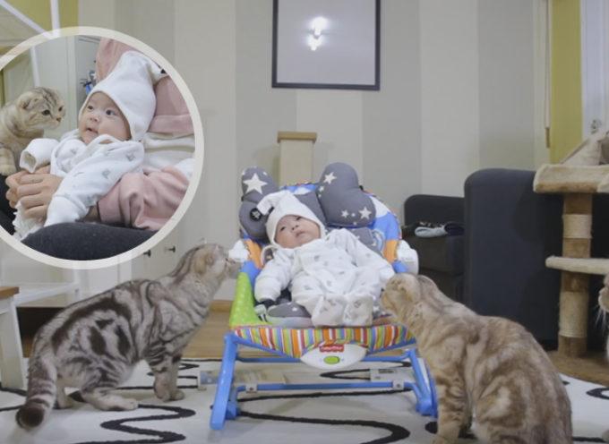 Primo incontro di 5 gatti con un neonato