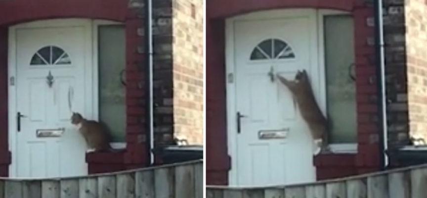Gatto educato usa il chiavistello per entrare in casa