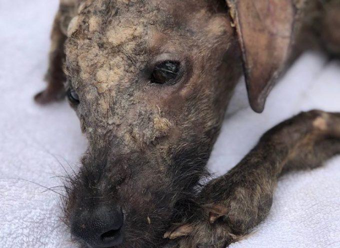 L'incredibile recupero di questo cane fa gridare al miracolo