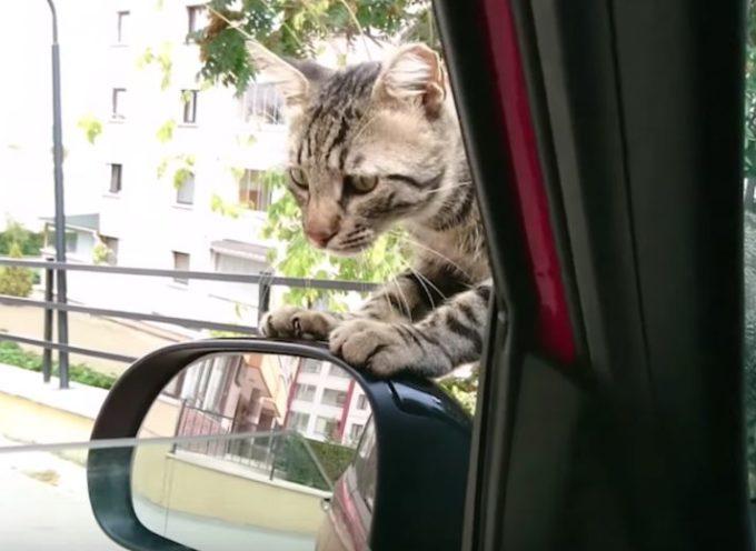 Questo gattino è salito su una macchina e non volle scendere finché non ebbe una casa