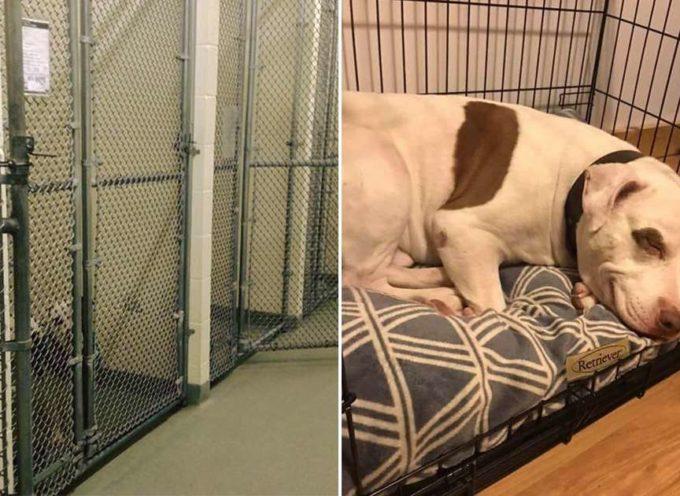 L'ultimo cane rimasto al canile, depresso, non mangia, ma alla fine…