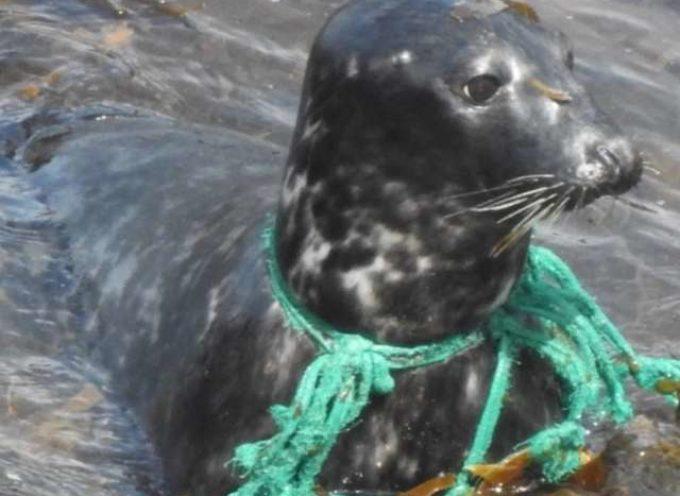 Dopo mesi con la rete da pesca in torno al collo, finalmente riescono a liberarla