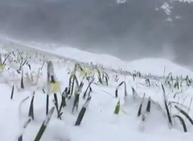 Coldiretti, agricoltori preoccupati per il gelo
