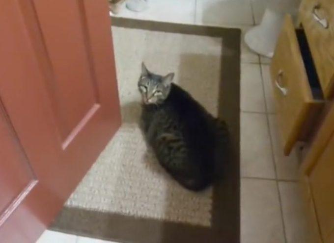 Un gatto aspetta l'amico cane cieco. Il video dell'incontro è sorprendente