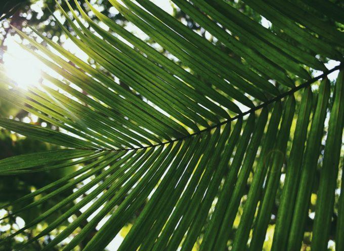 P&G stringe partnership per migliorare l'impatto ambientale e i mezzi di sussistenza dei coltivatori diretti nella supply chain dell'olio di palma