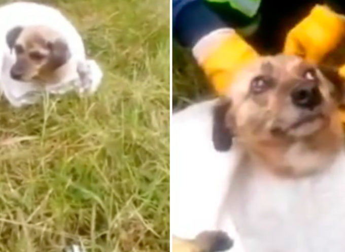 Questi eroi furono gli unici a fermarsi per salvare un cucciolo immobile