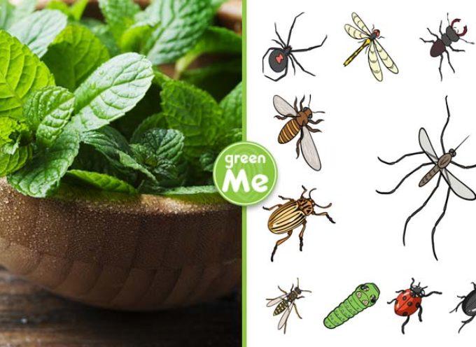 Con questa pianta in casa o in giardino puoi dire addio a ragni, moscerini e altri insetti