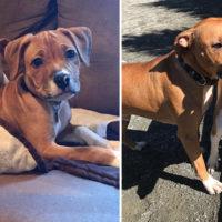 L'incontro emozionante tra un cane e un cucciolo orfano che ha cresciuto