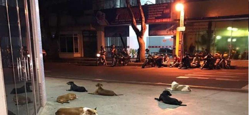 6 cani rincorrono l'ambulanza che trasporta il loro padrone all'ospedale. Il pronto soccorso sarà la loro nuova casa.