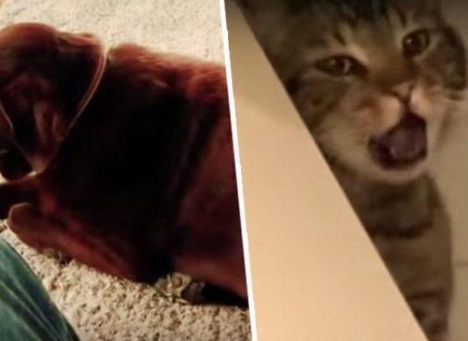 La verità dietro il video virale di un cane che scorreggia e fa vomitare un gatto