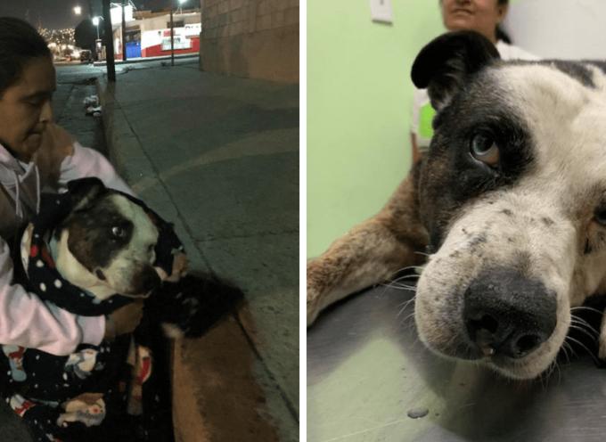 Tre donne salvano la vita di un cane randagio