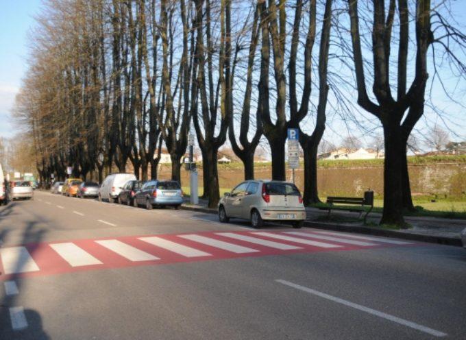 lucca – Ordinanza di abbattimento di un tiglio secco in viale Del Prete