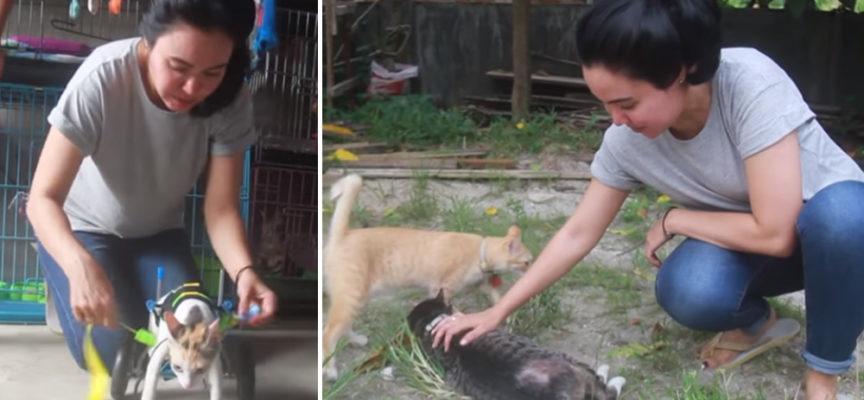 L'eroica donna che vive con 158 gatti che ha salvato dalle strade