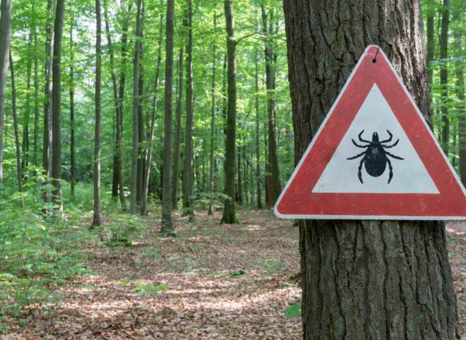 Zecca dei boschi: pericolosa anche per gli uomini. Dove si trova e come evitarla