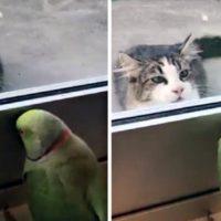 """Uccello gioca a """"Bu…Bu…Settete"""" con il gattino del vicino"""