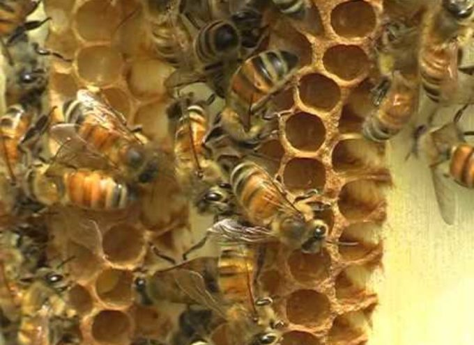 La meravigliosa vita delle api