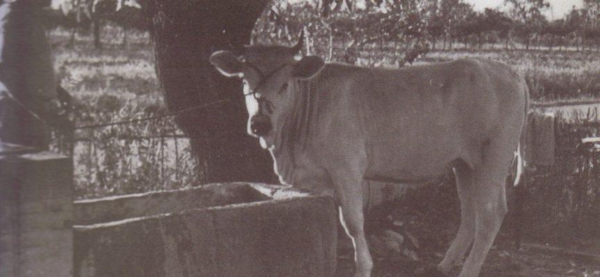 Avere un pozzo con acqua potabile era fondamentale, in campagna,