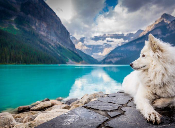 VACANZE: UN PASSAPORTO PER ANIMALI DA COMPAGNIA