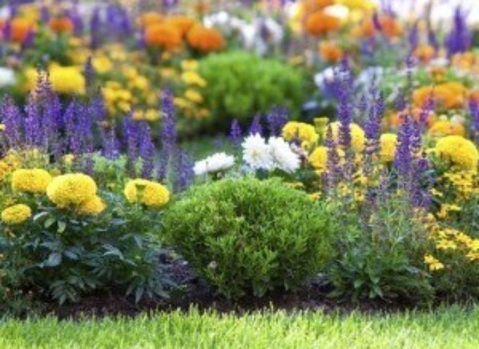 Le piante da fiore che resistono meglio al caldo