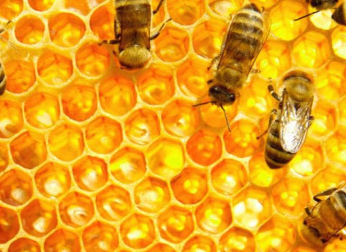 BARGA – Il castello delle api e tutto ciò che vola intorno a loro