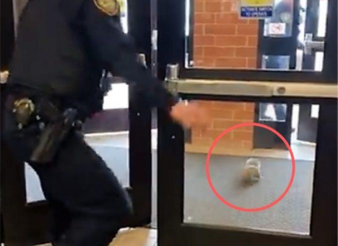 """Un intero dipartimento di polizia fugge terrorizzato prima dell'invasione di uno """"spaventoso"""" scoiattolo"""