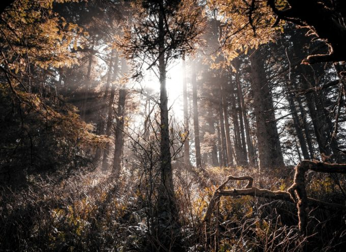 Concorso fotografico sulla sostenibilità ambientale