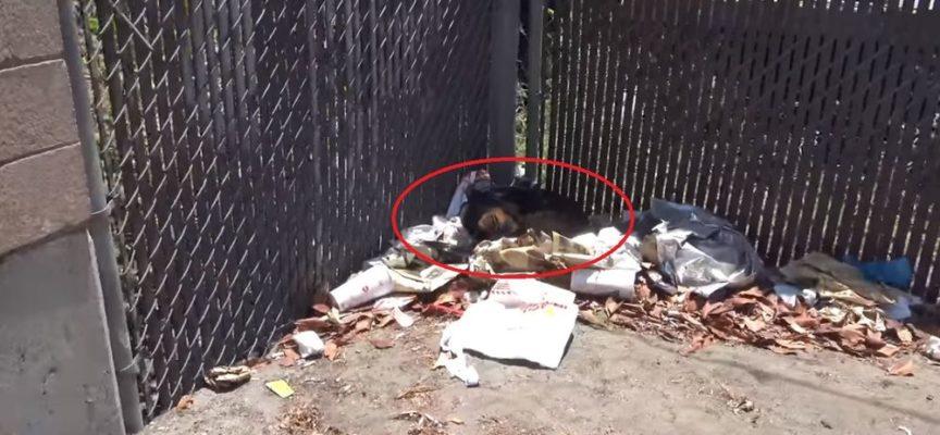 Non era nemmeno in grado di spostarsi su una pila di spazzatura – I suoi soccorritori temevano il peggio
