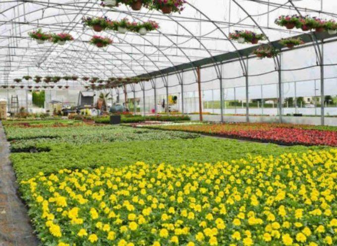 Florovivaisti italiani. Il nuovo regolamento fitosanitario avrà un forte impatto sui produttori