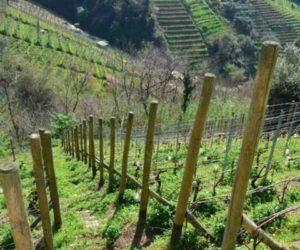 Seravezza – La Federazione Italiana Vignaioli Indipendenti, per promuovere il bere genuino e consapevole, all'Osteria Marconi