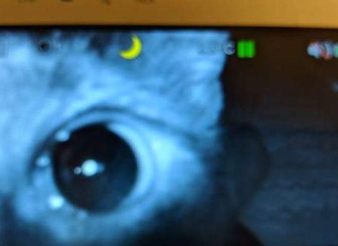 Una madre controlla il monitor del suo bambino e scopre che è perfettamente osservata