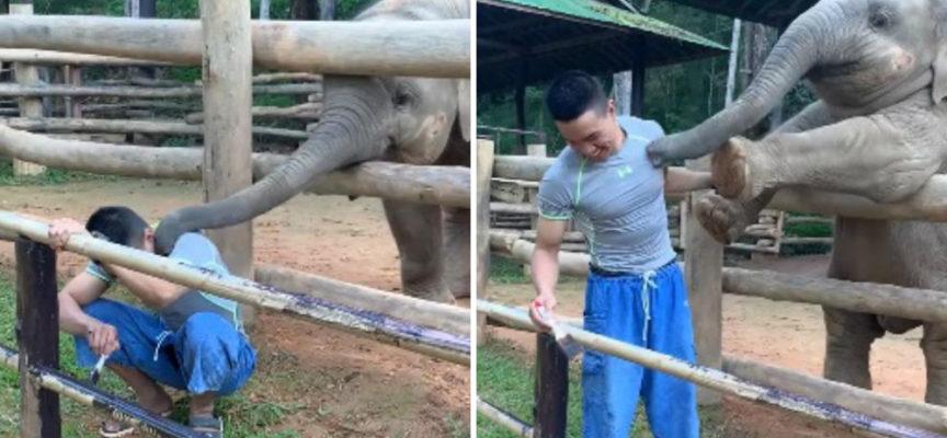 Un elefantino è disposto a fare tutto il necessario per ricevere una carezza dal suo custode
