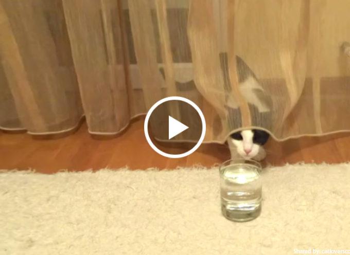 Adorabile gattino gioca con le bolle dell'acqua frizzante
