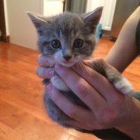 Un gattino è venuto dalla foresta direttamente a casa di una famiglia per chiedere di vivere con loro