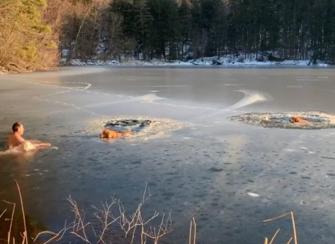 Si getta sul lago ghiacciato per salvare due cuccioli e il suo cane non esita a saltare con lui