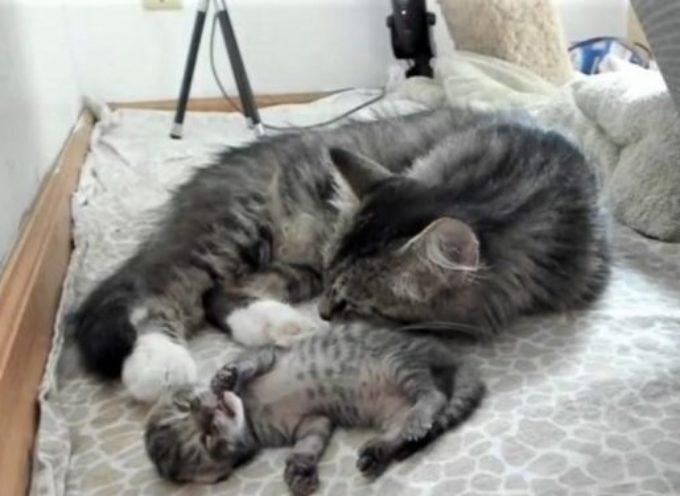 Giorni dopo il terribile dolore di perdere l'intera cucciolata un gatto fa nascere un nuovo gattino