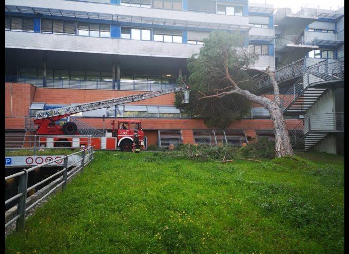 Pino si abbatte sull'ospedale Versilia, tragedia sfiorata nella notte