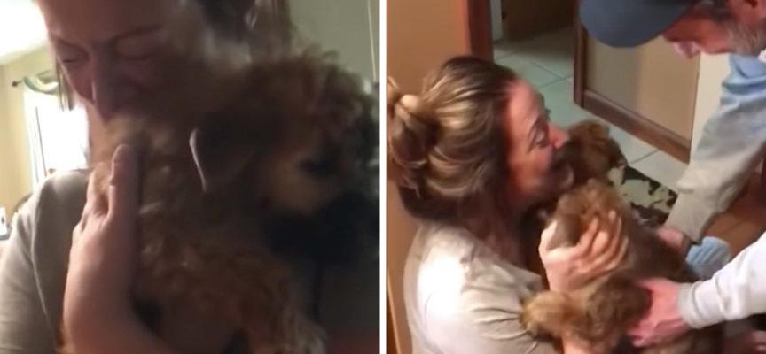 Gli danno un paio di cuccioli dopo una triste perdita e tocca il mondo con la sua reazione