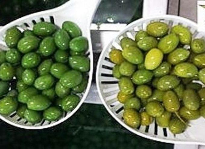 Come sono belle e verdi le olive colorate col solfato di rame. Peccato che poi Ti viene il cancro