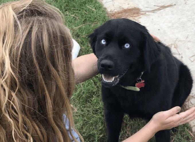 Ha mandato il suo cane a un programma di allenamento senza pensare che non lo avrebbe più visto