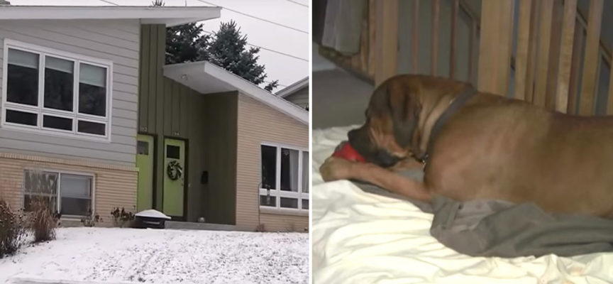 L'allarme della tua casa suona e tu prendi il tuo cane che dorme pacificamente accanto all'intruso ubriaco