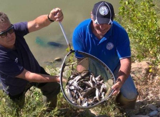 """""""Perché il sindaco di Camaiore oggi minaccia di rivolgersi al legale sulla vicenda della rimozione dei pesci morti"""