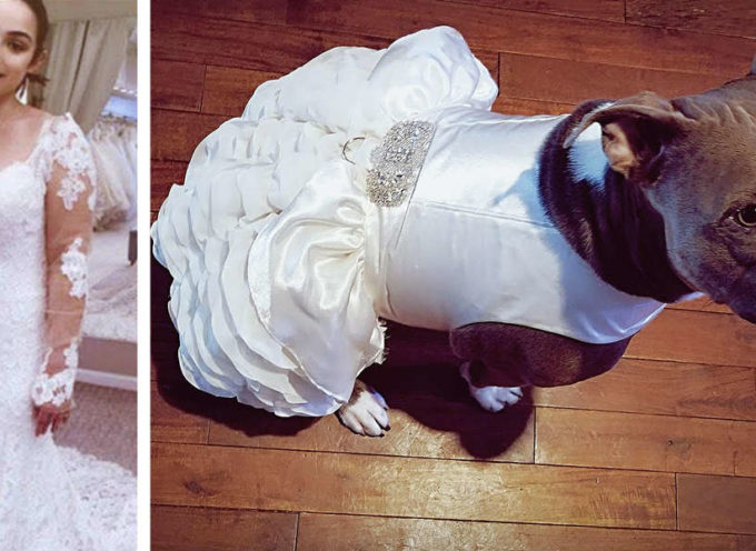 La sposa fa vestire esattamente come lei il suo cane per partecipare al matrimonio