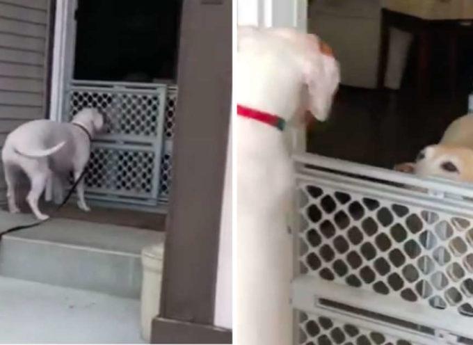 Cane fugge da casa per poter incontrare i suoi migliori amici.