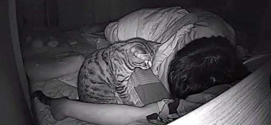 Ragazzo mette una telecamera nascosta per vedere cosa fa il suo gatto mentre dorme
