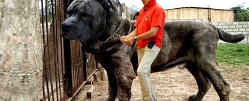 10 Razze Di Cani Sconosciute Più Forti Del Mondo