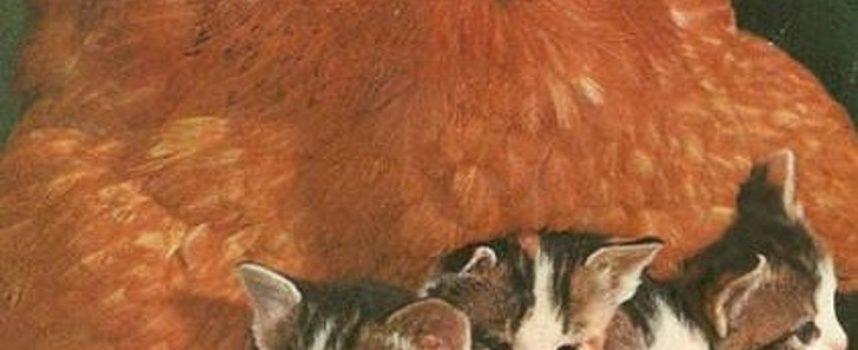 15 Galline che hanno fatto tutto il possibile per riscaldare i loro strani pulcini