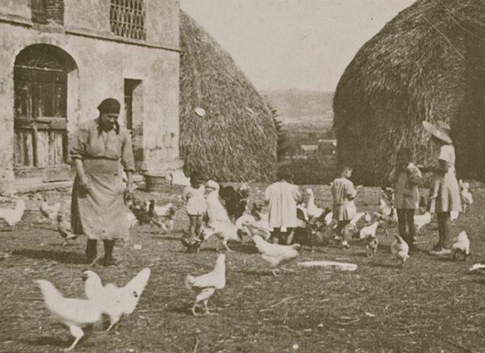 una casa di campagna con polli, e  galline