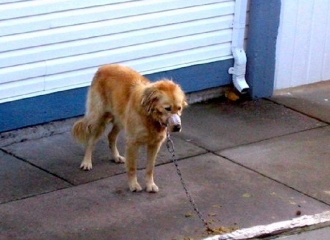 Il proprietario blocca il muso del cane con il nastro, i vicini entrano nel cortile per salvare il cane dopo anni di abusi