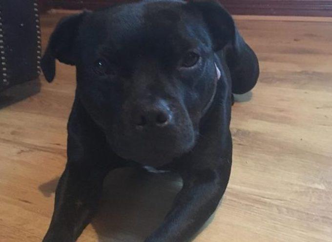 Incontra Lola, il cane che l'ha salvata dallo stupro